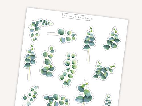 Eucalyptus || 12 autocollants | #28