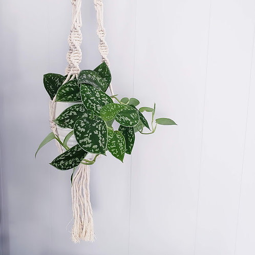 Jardinière en macramé | JESSI