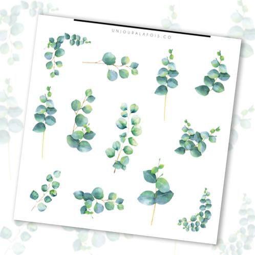 Eucalyptus    12 autocollants   #77