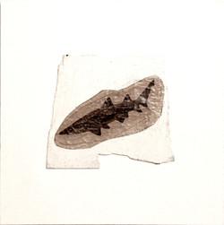 CAPT. SHARKY, 2014, mixed media on canvas, cm 50x50