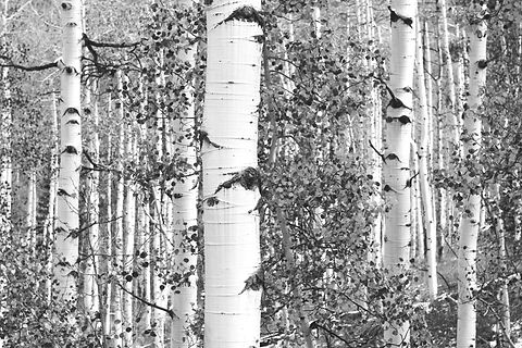 Dry Woods_edited.jpg