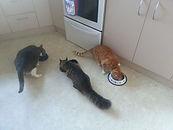 Cat Minding Auckland
