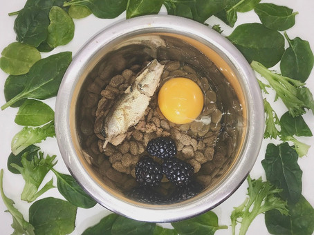 How To Nutritionally Enhance Your Dog's Kibble To Get The Most Out Of It!