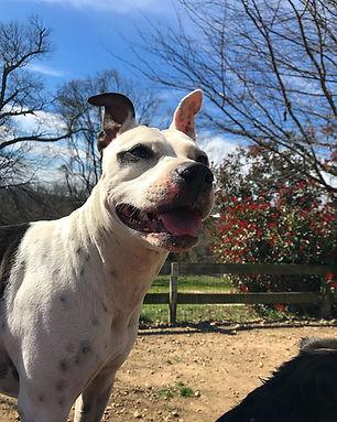 Stella is a professional taste tester at Four Leaf Clover Dog Treats!