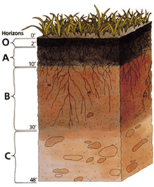 TR-1 Soils Fill Placement  Density (BC 1704.7.2-3)