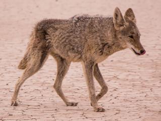 Are You a Dodo Bird or a Coyote?!
