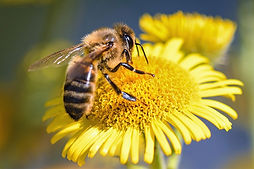 sentier des abeilles.jpg