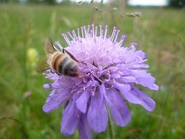 sentier des abeilles  3.jpg