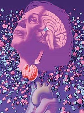 IISc's breakthrough in hypothyroidism treatment - Bangalore Mirror