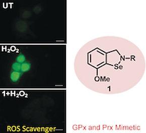 Antioxidant panaceas: Isoselenazoles protect cells from oxidative stress