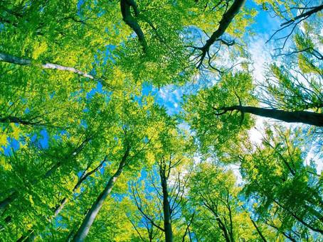 Se reconnecter à la nature pour se sentir vivante !