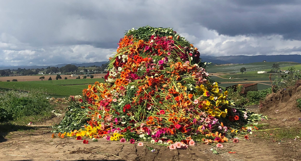 farmgirl-flowers-covid-19 copy.png