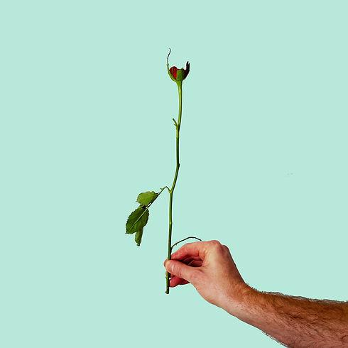 rose eaten.jpg