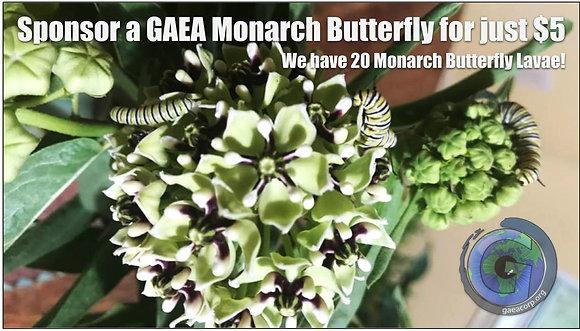 Sponsor a Monarch Butterfly
