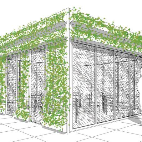 Progettare un giardino verticale