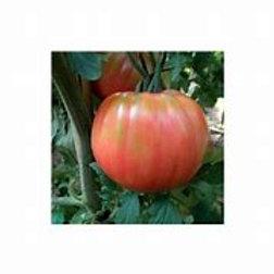 Pomodoro rosa