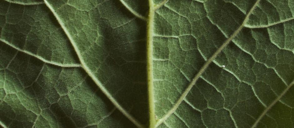 Moc roślin