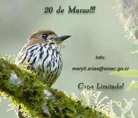 Primer Conteo de aves Tapantí