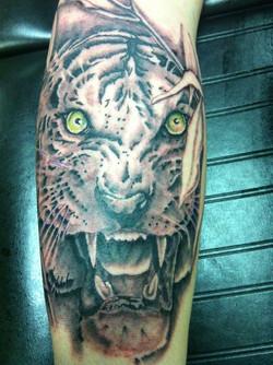 jt tiger