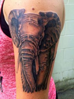 jt elephant