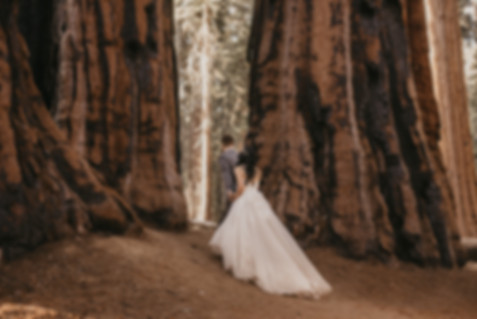 T+E+Sequoia_National_Park_Elopement_Stac