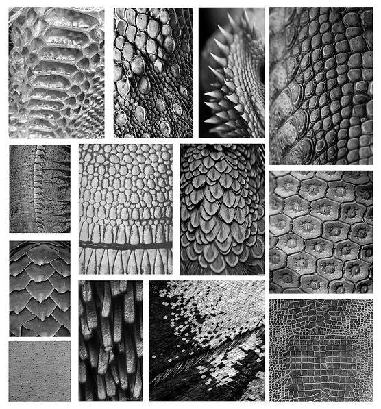 scalestexture.jpg