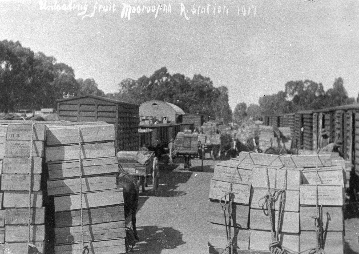 Ardmona_Loading_Fruit_c1917.jpg