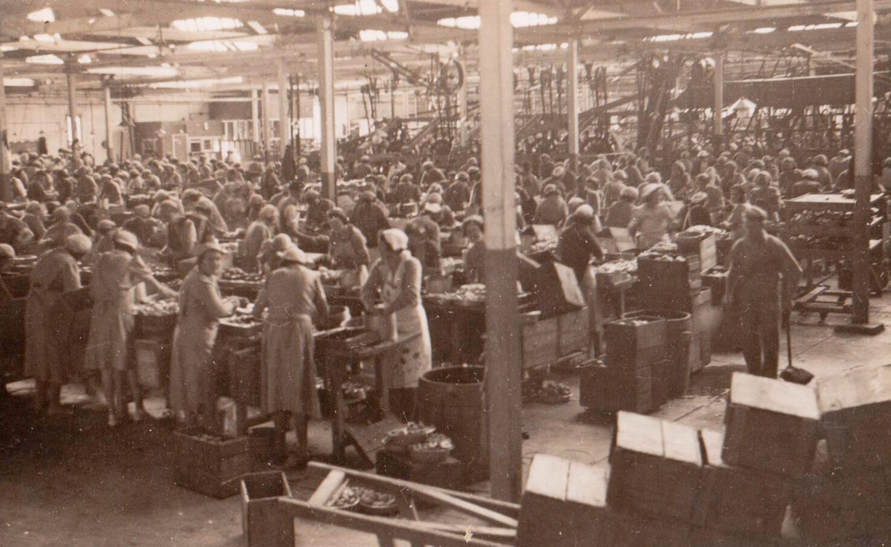 Ardmona_Cannery_1926.jpg