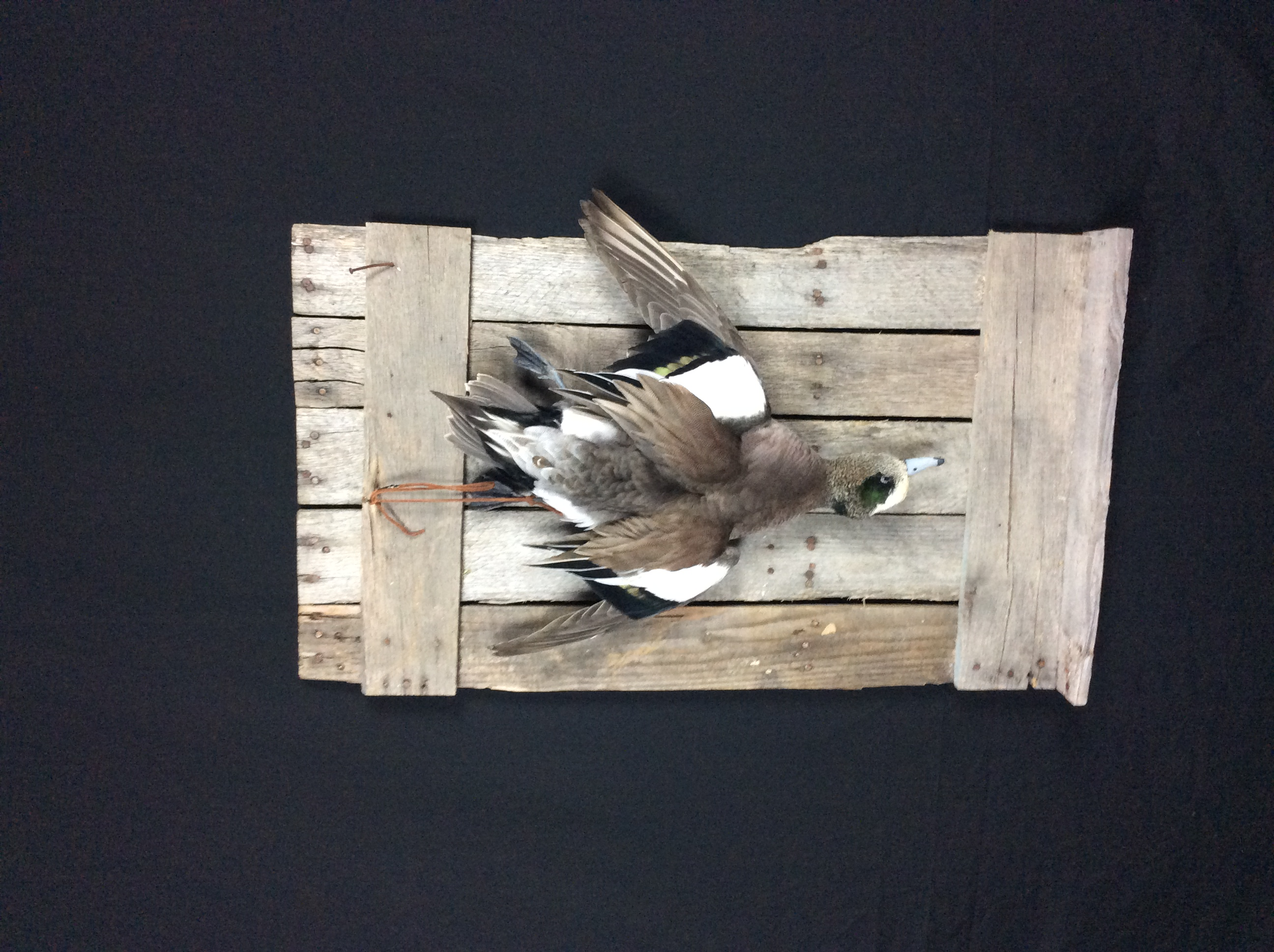 Widgeon Strap Mount