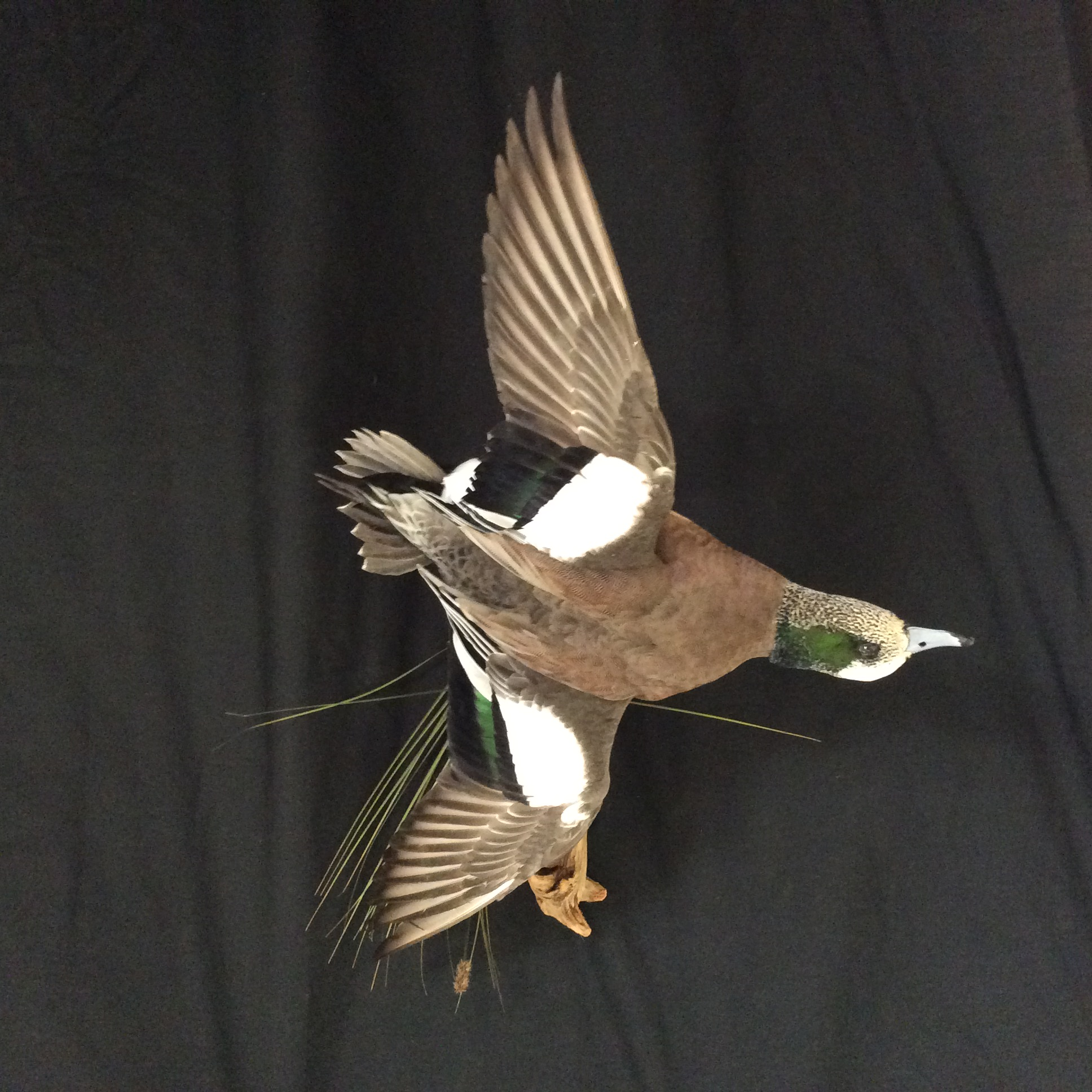 Widgeon Mount