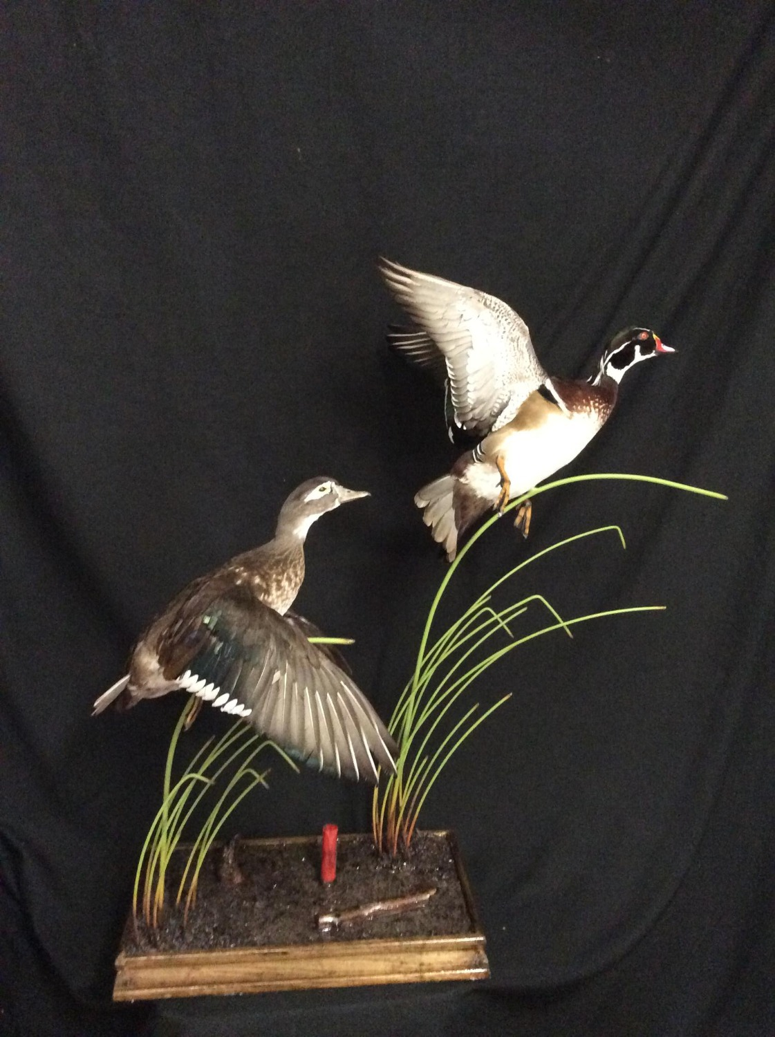 Wood Duck Pair on Base