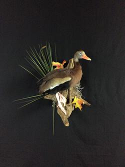 Tree Duck standing mount