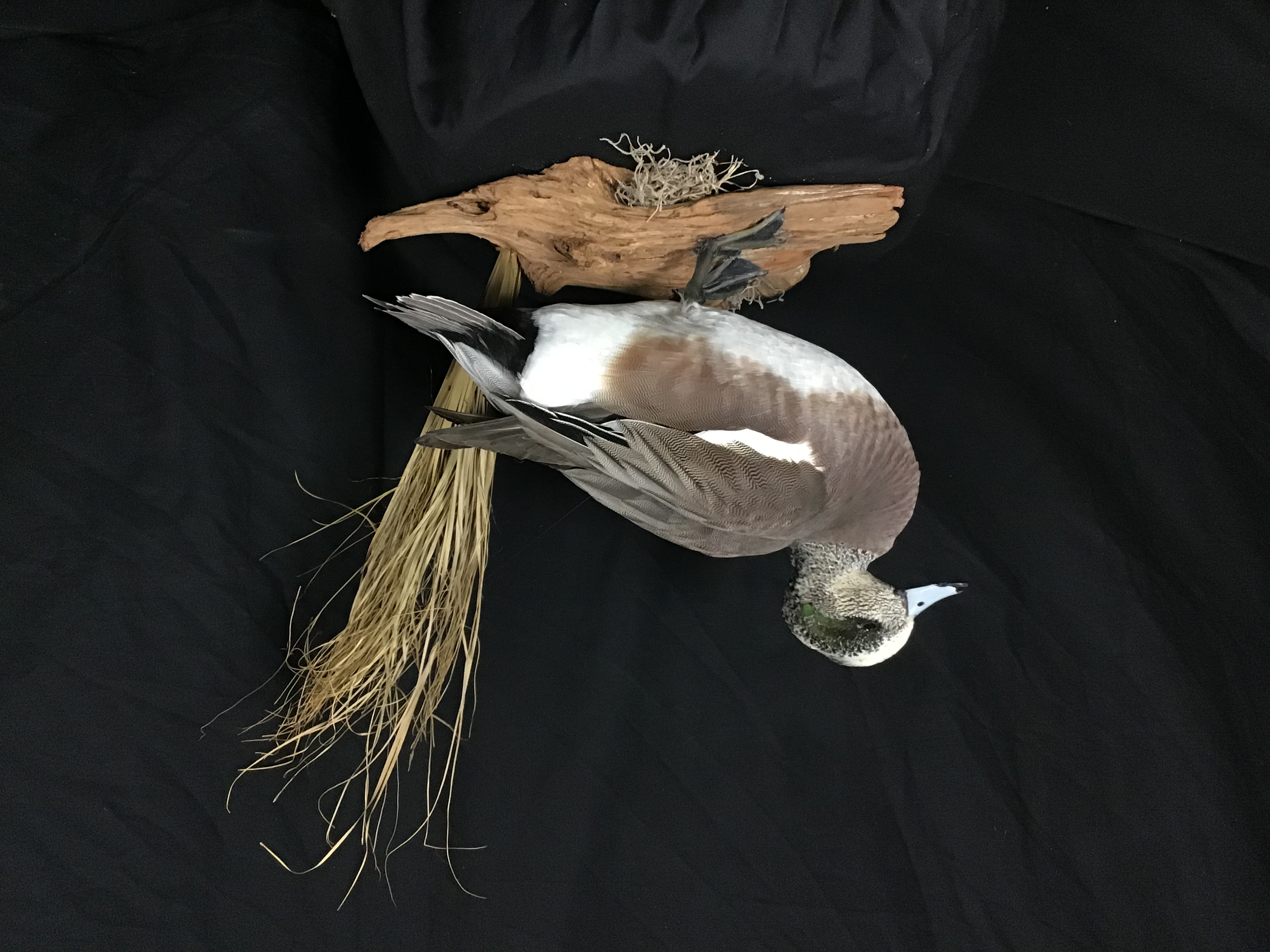 Widgeon standing mount