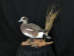 Widgeon standing mount
