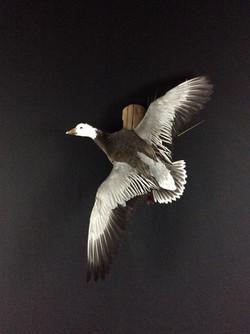 Blue goose flying mount