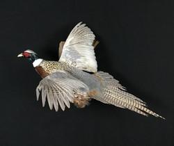Pheasant flying mount