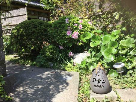 神奈川:アナン邸(鎌倉市 極楽寺)