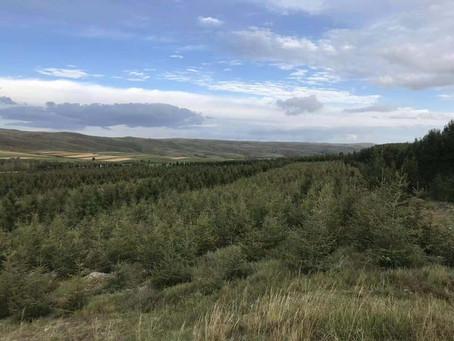 2019年の寄付でさらに550本植樹