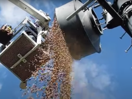 Nut Job: Birds Stash Thousands of Acorns Inside an Antenna