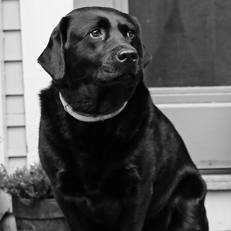 Vintage Pup.jpg