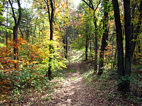 Trail through woods in autumn low res.pn