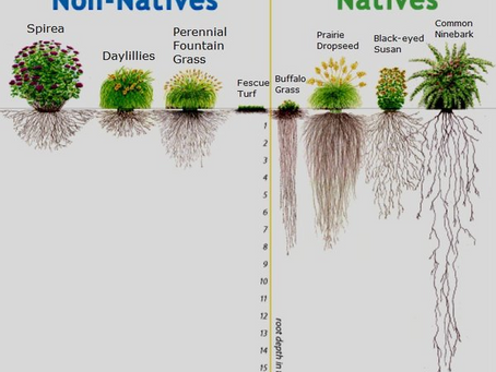 How deep are your roots?