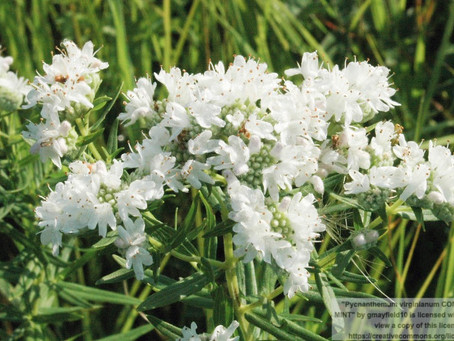 What's New at UP Native Plants