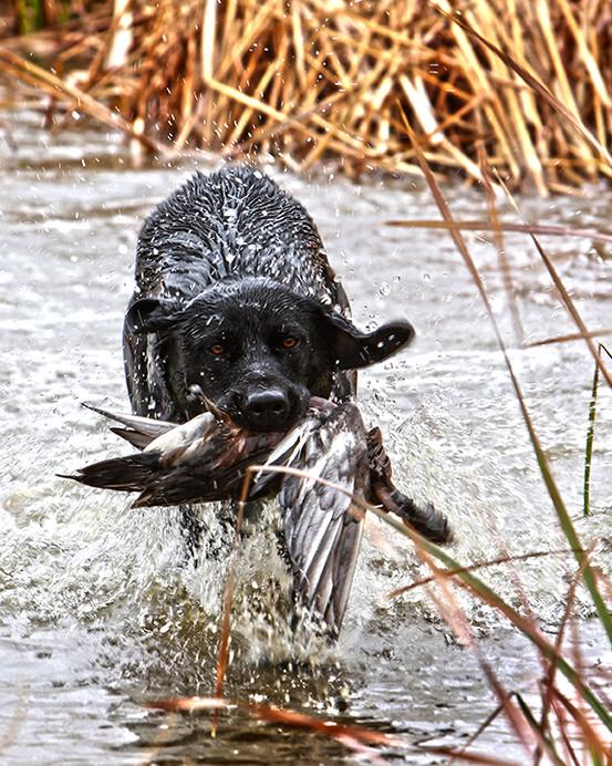 Beretta Water Foul Hunting