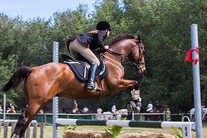 horse jumping.jpeg