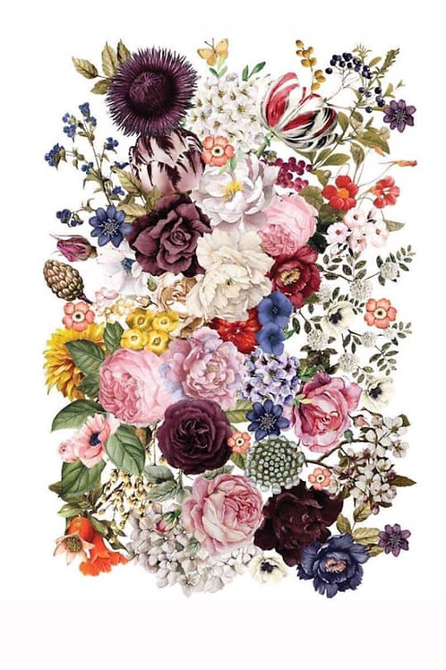 PM642341 -Transfer-Wondrous Floral
