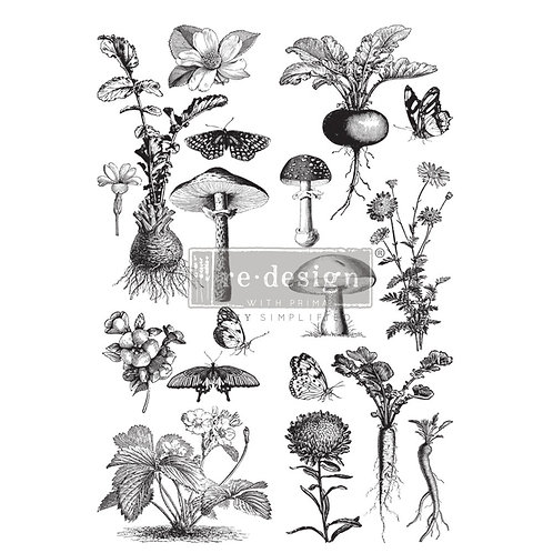 PM646561 Transfer Fungi Forest