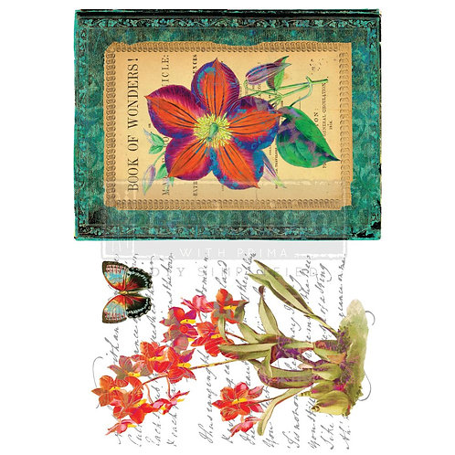 PM640583 -  Transfer - Wondrous Flora