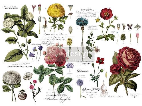 646509 - Transfer Vintage Botanical