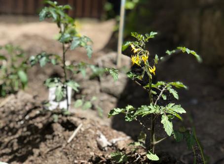 耕せ、肥やせ、種を蒔け。